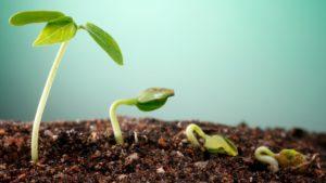 תוכנית עסקית לסטארט-אפ בשלבי צמיחה לעומת תוכנית עסקית לשלב הseed