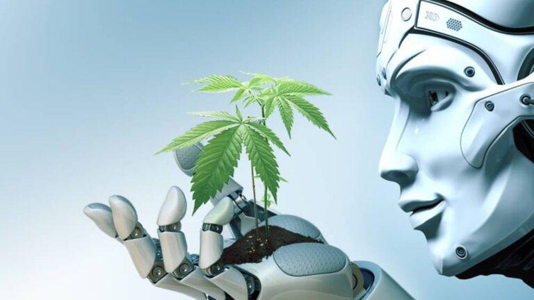 תוננית עסקית בתחום הקנאביס AI